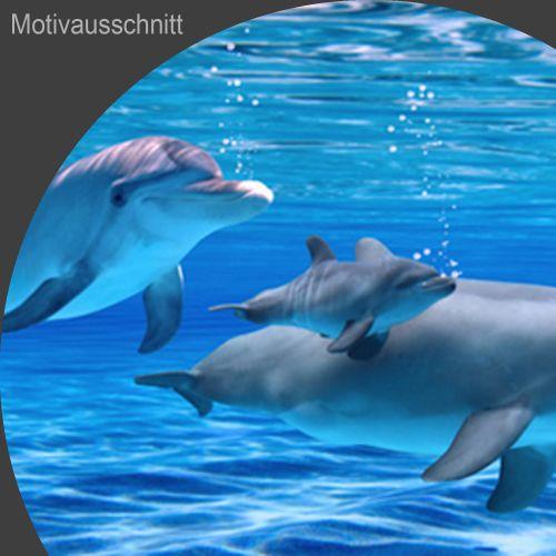 """Küchenrückwand aus Glas mit Motivdruck """"Delphine""""  Vorschaubild #2"""
