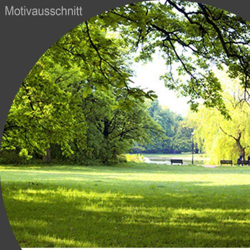 """Küchenrückwand aus Glas mit Motivdruck """"Waldblick""""  Vorschaubild #2"""