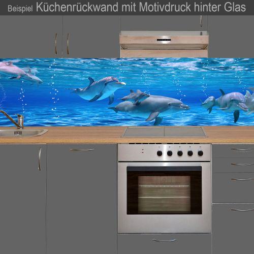 """Küchenrückwand aus Glas mit Motivdruck """"Delphine""""  Vorschaubild #3"""